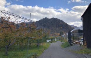紅葉を見ながら食べると美味しさも二倍!「定山渓ファーム」